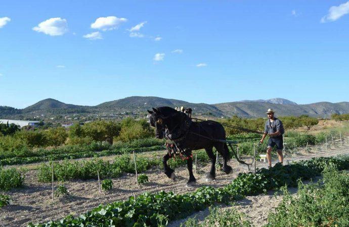 """Quico Llopis: """" La vida con los caballos es una conexión directa con la naturaleza"""""""