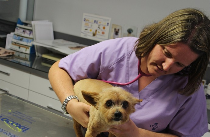 Centre Veterinari de Teulada, donde cuidar y poner guapa a su mascota