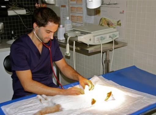 La importancia del control y la prevención en mascotas adultas