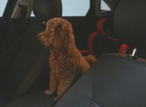 Este verano viaja con tu mascota
