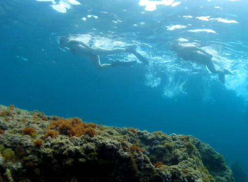 Sumérgete en el fondo del mar de Benissa