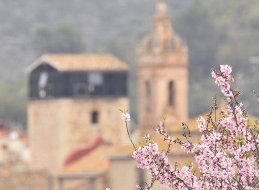 El espectáculo de los almendros en flor en Alcalalí