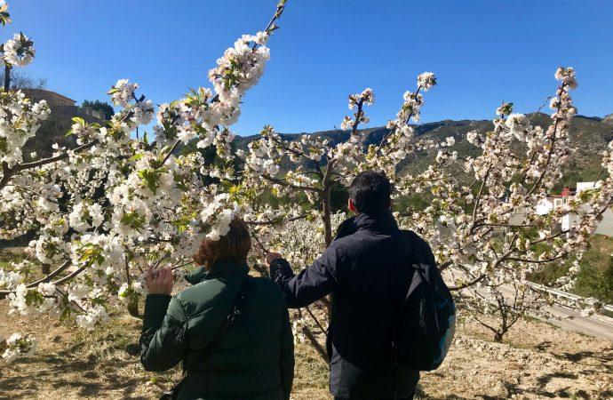 La Vall de Gallinera florece