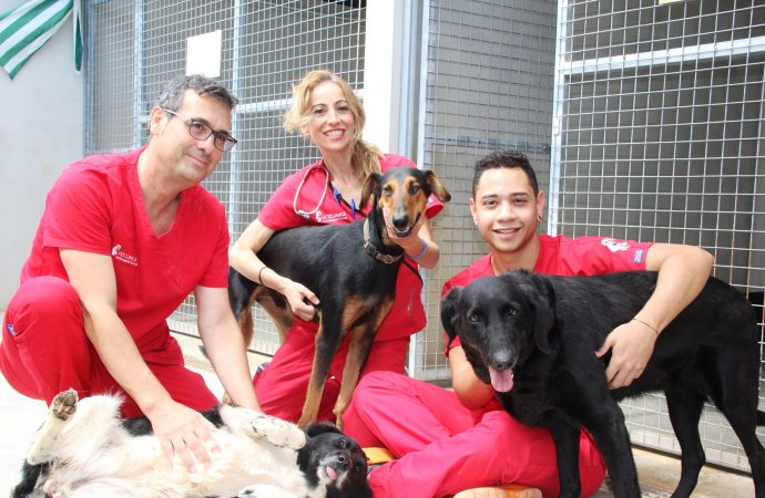 La labor social de VETCLINICS Technological Pet Care